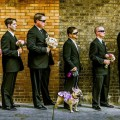 Beautiful Blooms Andy Todes Tendenza Pink Wedding Dog Groomsmen