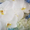 Beautiful Blooms White and Aqua Bat Mitzvah